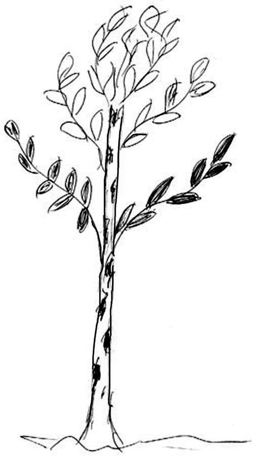 Картинка для детей дерево с дуплом: Раскраска Дерево с ...