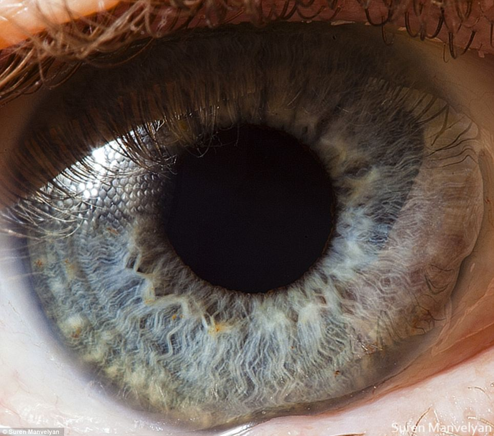 Spectrum: In humans irises have been known to be green, blue, brown, and in rarer cases, hazel, grey, violet, or even pink