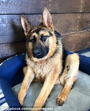 The four-year-old German Shepherd is said to behave more like a puppy than a grown up dog