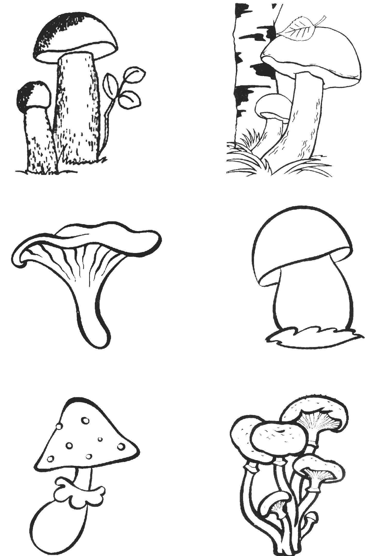 Картинки для детей опята: Картинки опята грибы для ...