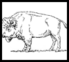 How to draw buffalo and bison.