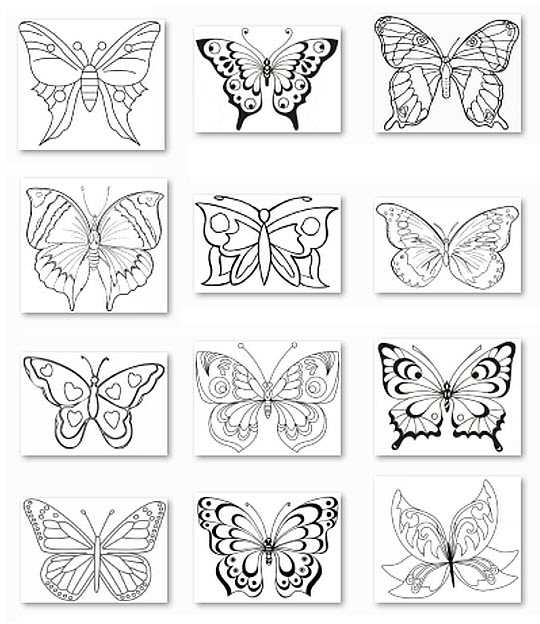 бабочки картинки раскраски ой Twin Star Ru