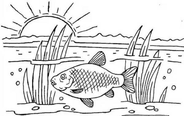 раскраска рыбы для детей распечатать детские раскраски рыб