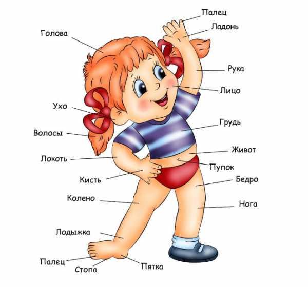 Я человек картинки для дошкольников – Части тела картинки ...