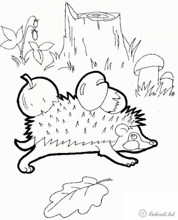 звери в лесу раскраска раскраски животные наших лесов